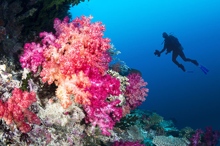 Discover the wonders of the ocean as you learn to dive