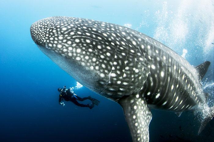 Encounters with ocean giants create memories that last a lifetime