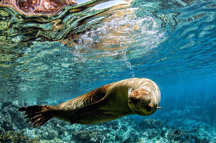 Meet Mexico's friendly sea lions