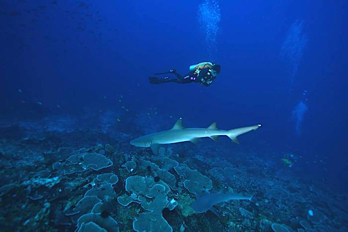 Drift diving in Indonesia