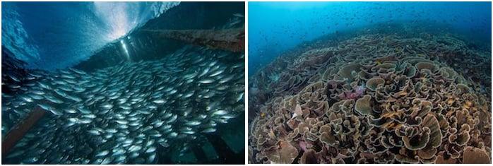 Corals and Schooling fish in Raja Ampat