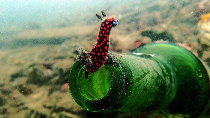 Nudibranch-Muck Diving