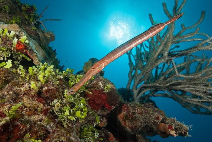 Wall diving in Turks & Caicos - Explorer Ventures