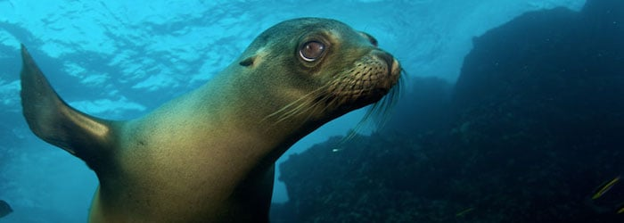 6 liveaboards in Galapagos