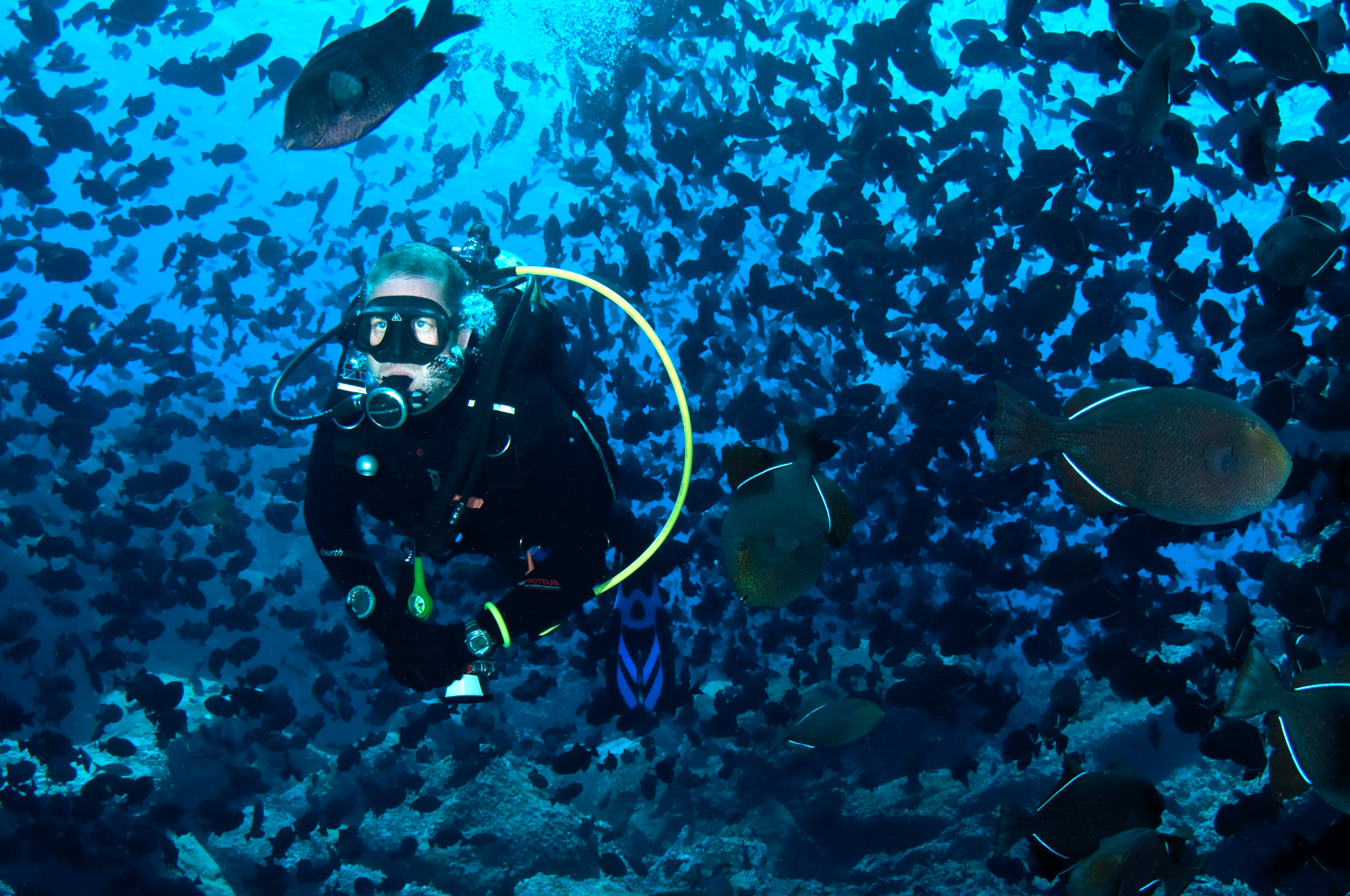 Exotic dive locations have never been so accessible. Explore the worlds oceans beneath the surface.