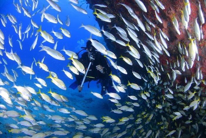 Fish life found at depth