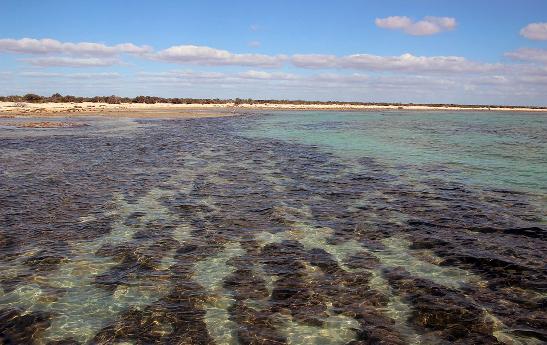 Shark Bay shore