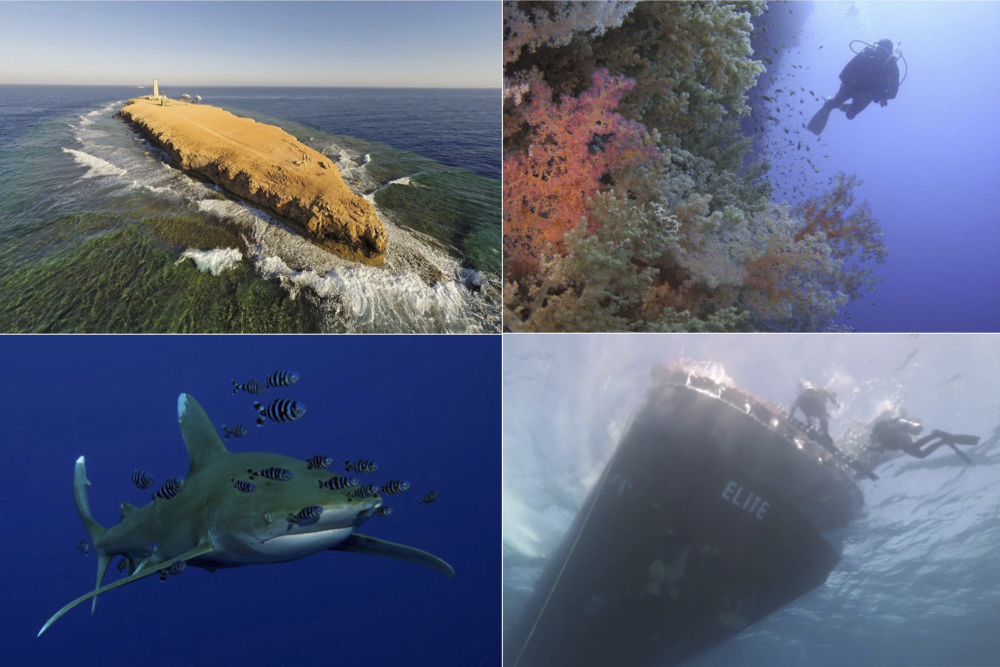 Drift Diving in the Red Sea
