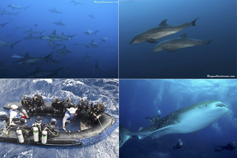 Galapagos Drift Diving