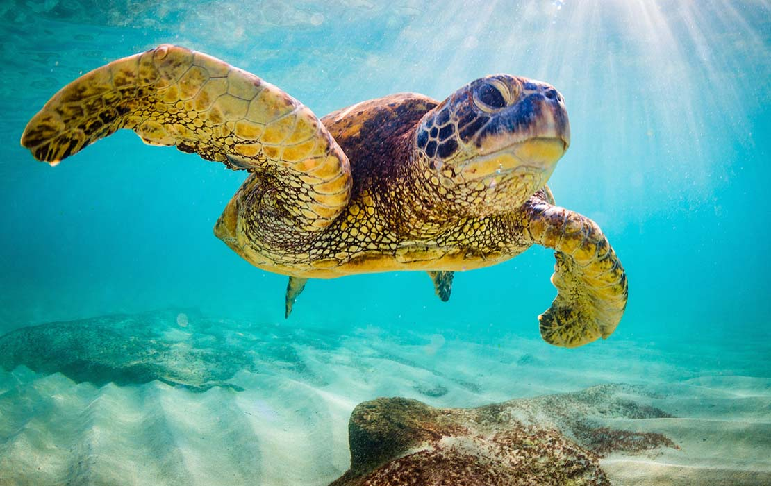 Grumpy looking sea turtle