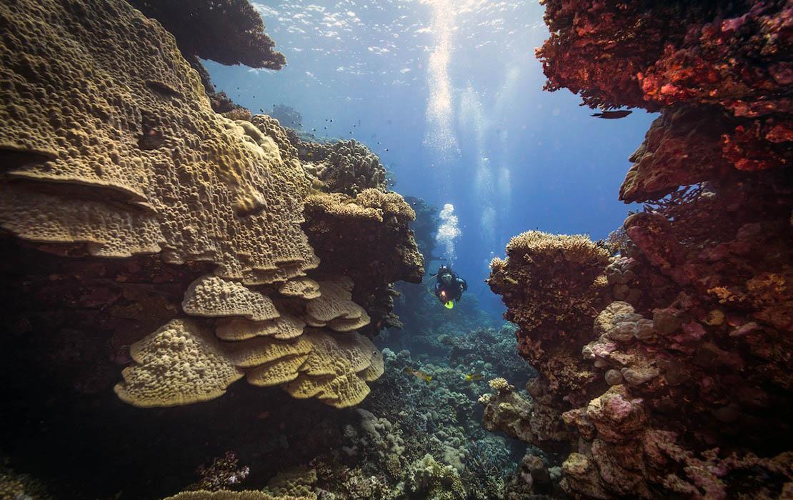 Diver in between coral walls