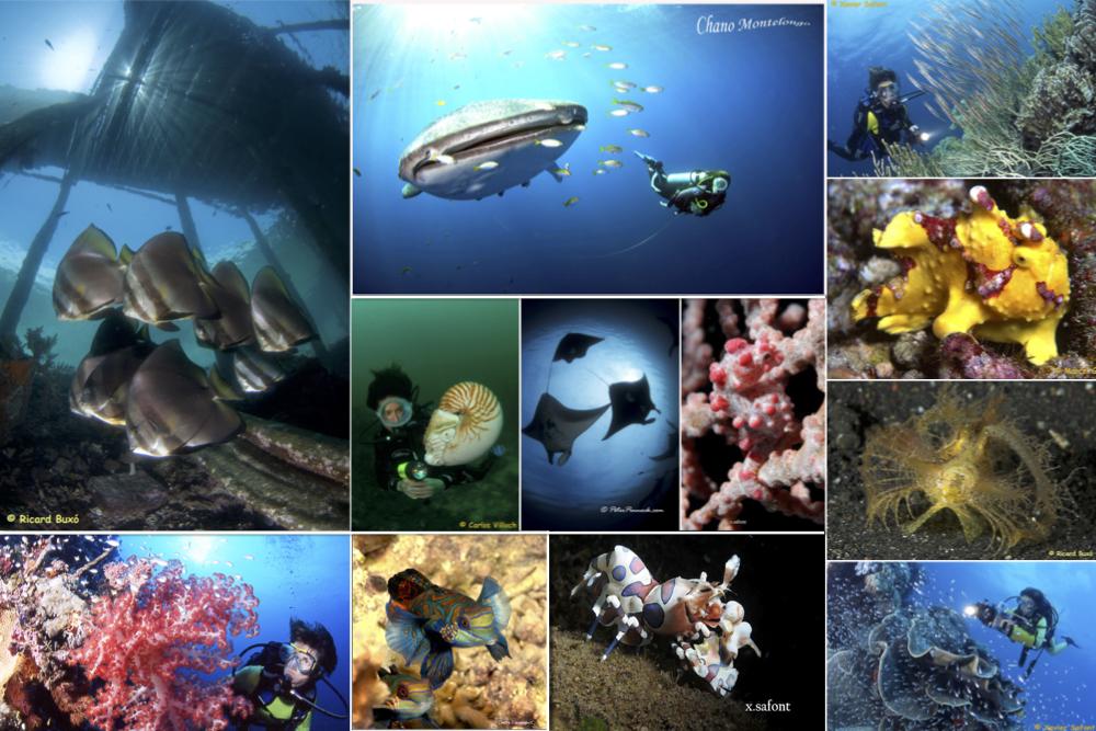 Explore Indonesia with Ondina