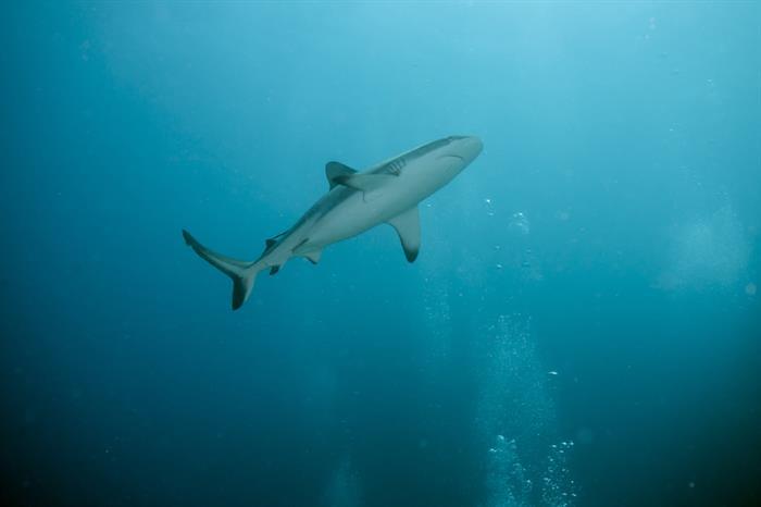 Sharks in Western Australia