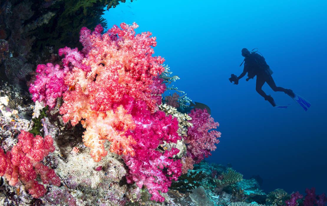 Soft Coral in Fiji