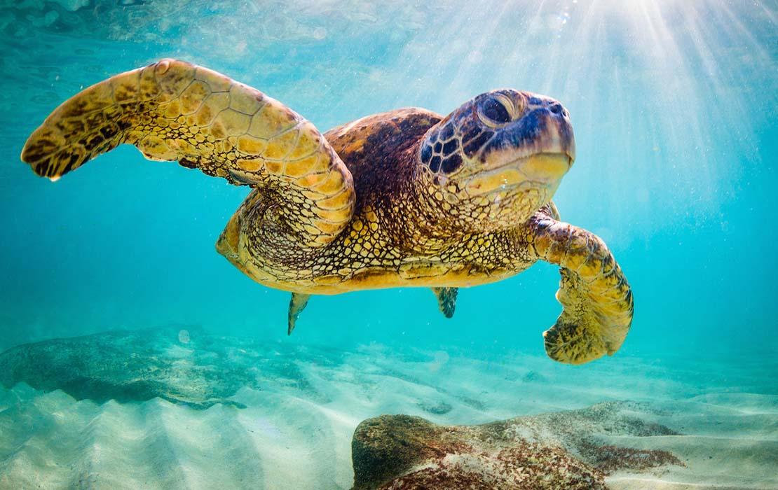 Sea turtle in Wakatobi National Park, Indonesia