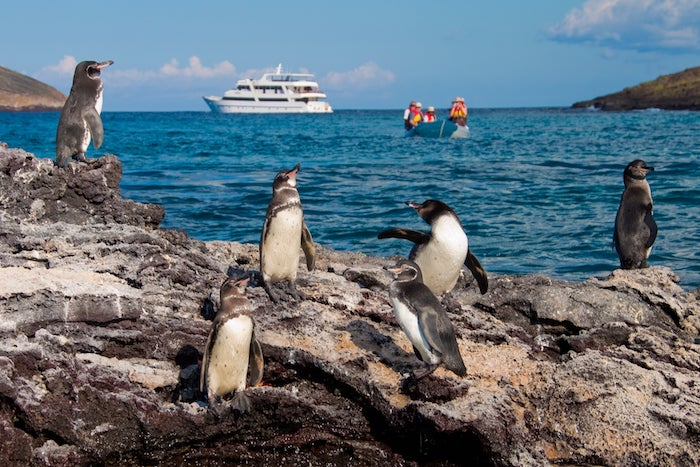 36 small ships in Galapagos