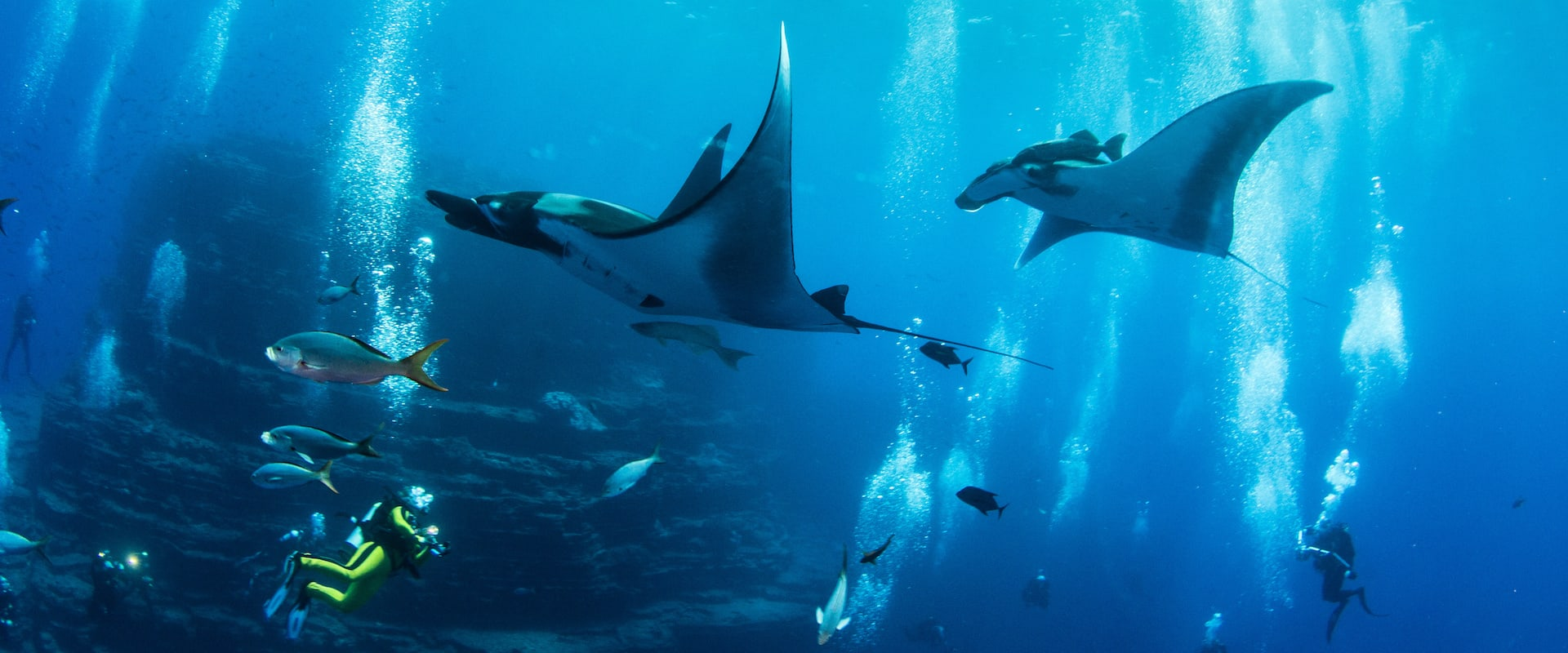 Manta Alley Liveaboard Diving