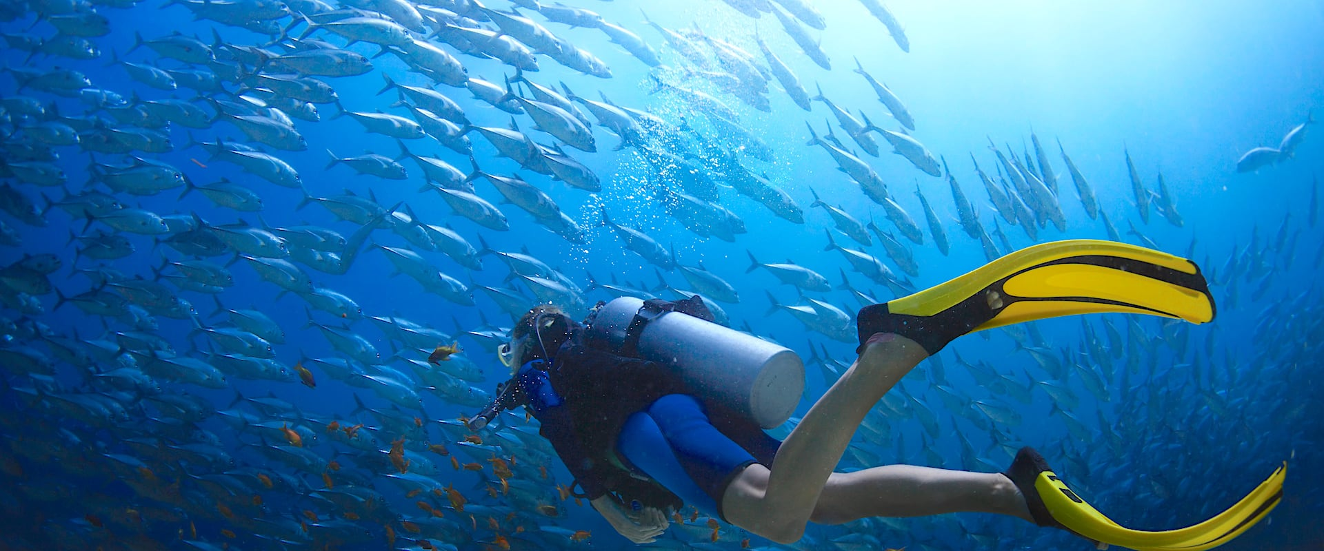 Jessie Beazley Reef Liveaboard Diving